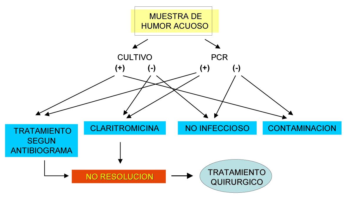 Fig. 9: Algoritmo diagnóstico y terapéutico propuesto para el tratamiento de la endoftalmitis crónica.